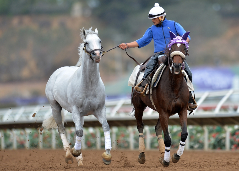 A trainer runs a mare during workouts for the 34th Breeders Cup at Del Mar Thoroughbred Club. — Reuters