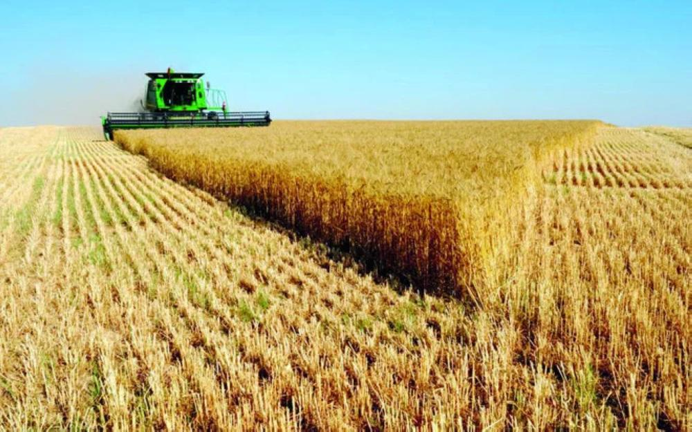 Saudi Arabia decided to import all its wheat needs to save large amounts of water used for irrigation.