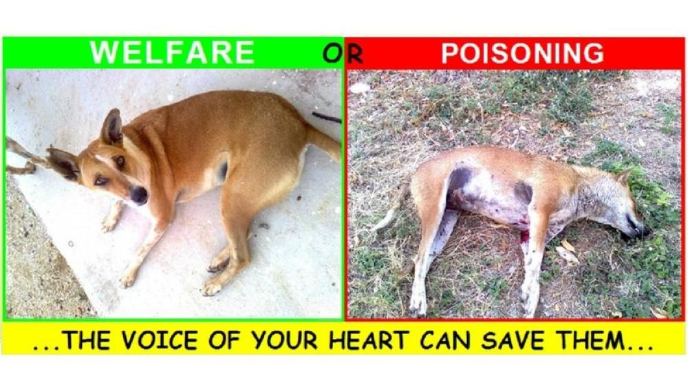 Stop poisoning cats and dogs!