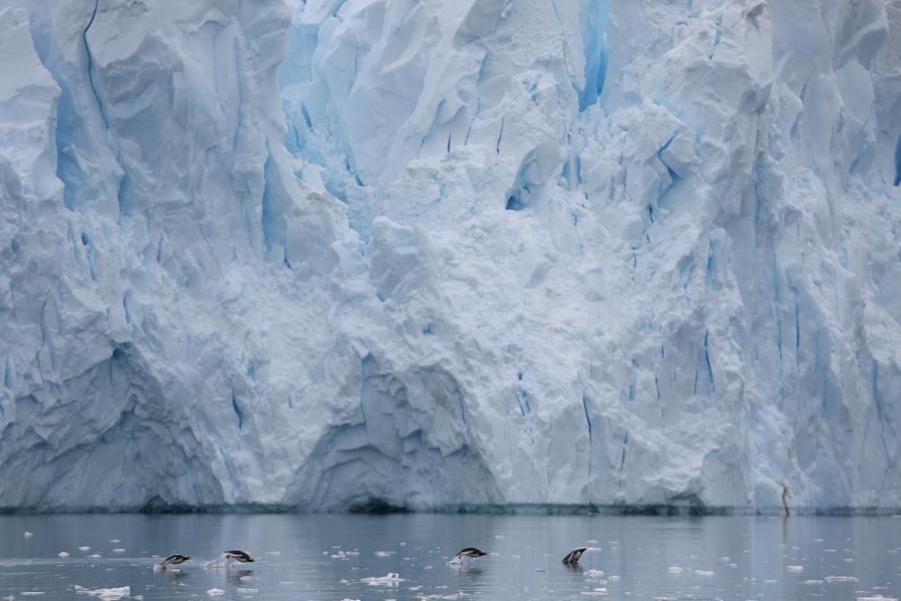 Penguins swim next to a glacier in Neko Harbour, Antarctica, in this Feb. 16, 2018 file photo. — Reuters
