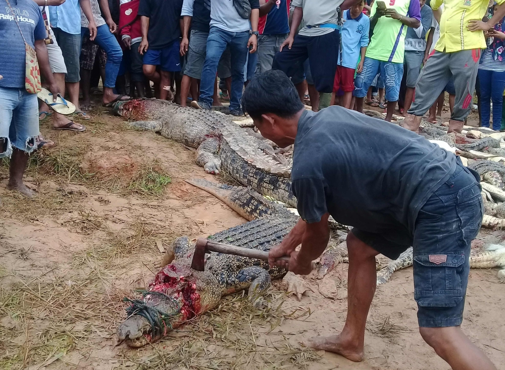 A man kills a crocodile among other dead crocodiles slaughtered by a mob in Sorong in Indonesia's Papua province, on Sunday. — AFP