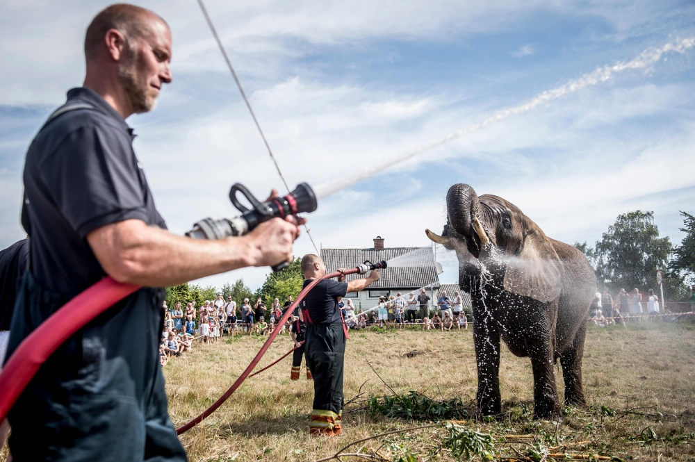 Local firefighters spray water to cool down elephants of the Arene circus due to high temperatures in Gilleleje, Denmark, on Thursday. — AFP