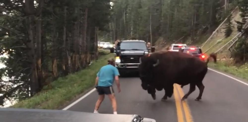 This video grab shows a bison charging at a man identified as Raymond Reinke in Yellowstone National Park.