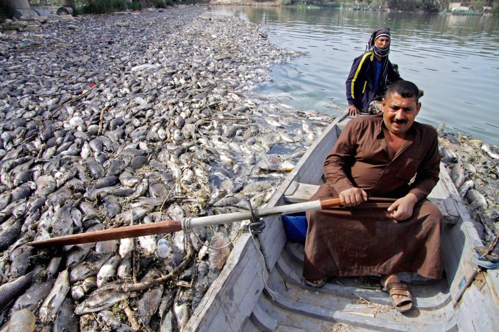 An Iraqi man stirs his boat around dead fish, from nearby farms, floating on the Euphrates river near the town of Sadat Al Hindiya, north of the central Iraqi city of Hilla, Friday. — AFP