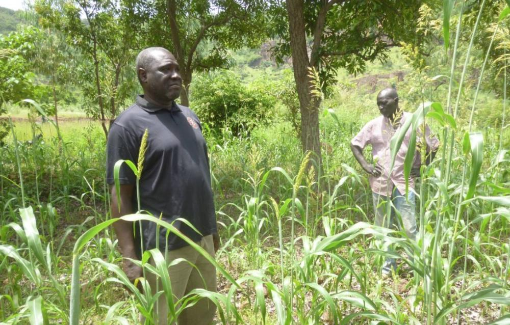 Madou Coulibaly and Alou Camara visit a field of the sorghum variety Jakunbè in the village of Siby,  Mali. — Reuters