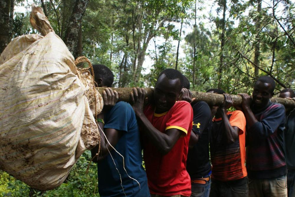 A group of young men transport uprooted trees from Samuel Rono's farm in Kerita village, southern Kenya, onto a waiting truck, in this Aug. 28, 2018 file photo. — Thomson Reuters Foundation/