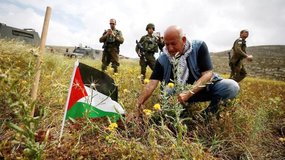 The Palestinian Authority (PA) has planted millions of olive trees in the West Bank in a ploy to lay claim to land and set facts on the ground, according to an internal report by the Israeli Civil Administration (ICA). — Courtesy photos