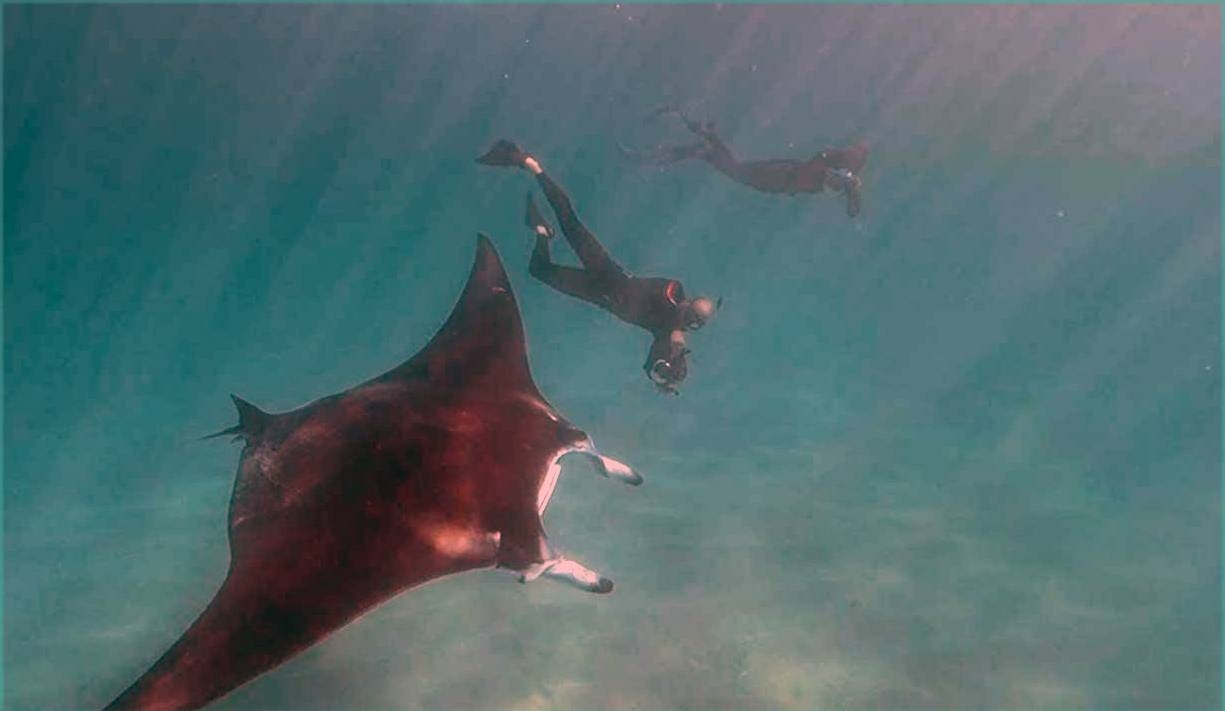 A giant manta ray with several fishing hooks caught below its eye appeared to ask two nearby divers for help in removing them, and then waited patiently for them to do so. — Courtesy YouTube
