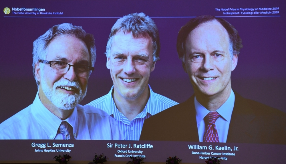 The winners of the 2019 Nobel Prize in Physiology or Medicine (L-R) Gregg Semenza of the US, Peter Ratcliffe of Britain and William Kaelin of the US appear on a screen during a press conference at the Karolinska Institute in Stockholm, Sweden, on Monday. -AFP