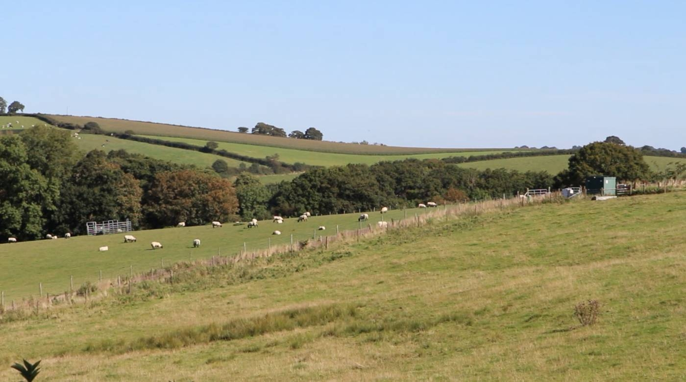 "Sheep graze at Rothamsted Research's ""Farm Lab"" in North Wyke, Devon, England, on Sept. 13, 2019, in this screengrab taken from video. — Thomson Reuters Foundation"