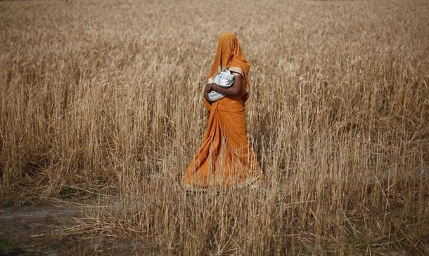 A woman carries her baby as she walks through a wheat field on her way to a polling station to cast her vote in Shabazpur Dor village, in Amroha district in the northern Indian state of Uttar Pradesh April 17, 2014. India kicked off the biggest day of its mammoth general election on Thursday, with a quarter of its 815 million voters set to head to the polls during a week of fresh blows for the ruling Congress party and gains for the Hindu nationalist opposition. REUTERS/Adnan Abidi  (INDIA - Tags: POLITICS ELECTIONS TPX IMAGES OF THE DAY) - RTR3LOKB