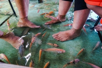 Fish nibble at the feet of Indonesian diners as they have their lunch at a fish pool restaurant at Wedomartani village in Yogyakarta, Indonesia, in this Nov. 15, 2019 file photo. — AFP