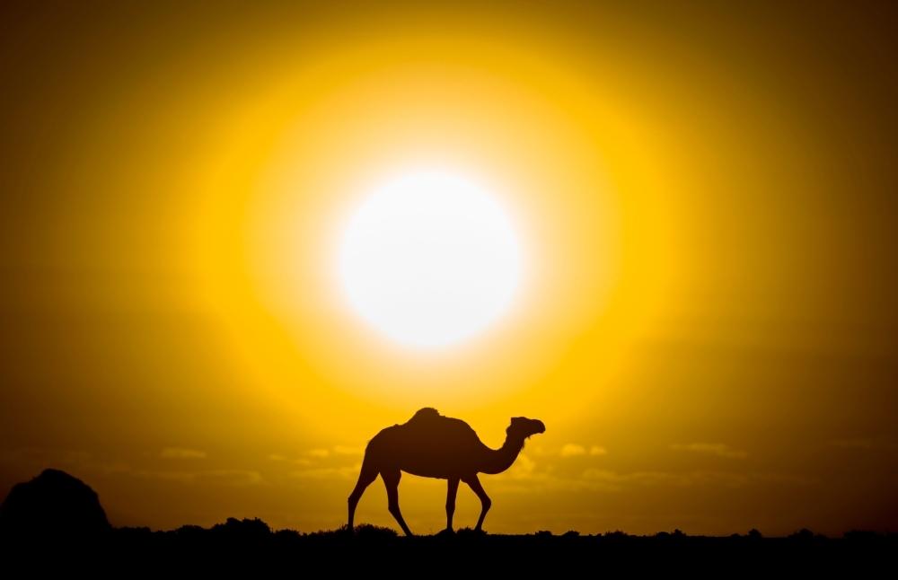 Camel — Sun