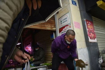 A turtle for sale at a market in Wuhan, the epicenter of a deadly new virus that came from an animal. — AFP