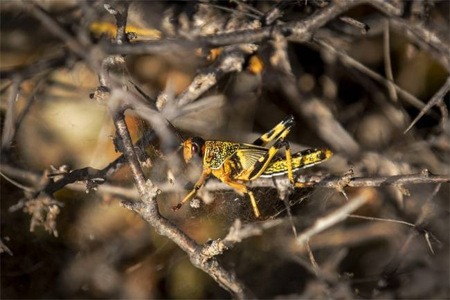 Swarms of locusts which are wreaking havoc across East Africa have now arrived in South Sudan, the government said Tuesday, threatening more misery in one of the world's most vulnerable nations.