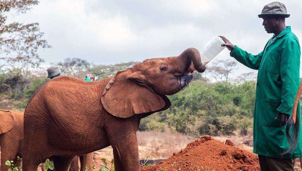 Rescued orphan elephants at David Sheldrick Wildlife Trust in Kenya. — courtesy UNEP/Natalia Mroz