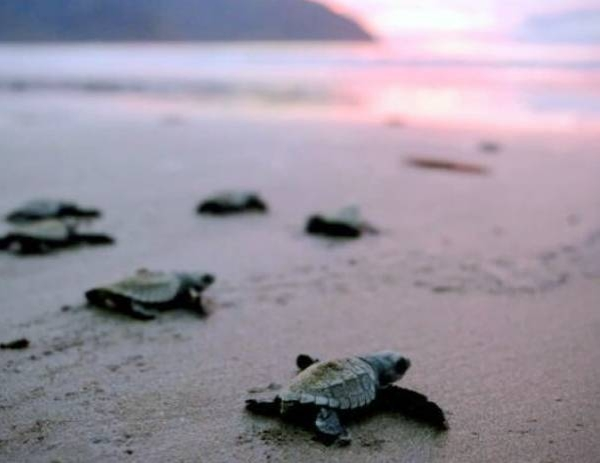 Friend of the Sea announces standard for sustainable sea turtle watching.