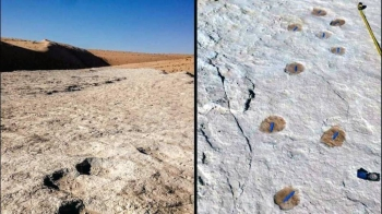 Saudi Arabia announced on Wednesday the discovery of 120,000-year-old footprints of humans and predators in the northern region of Tabuk.