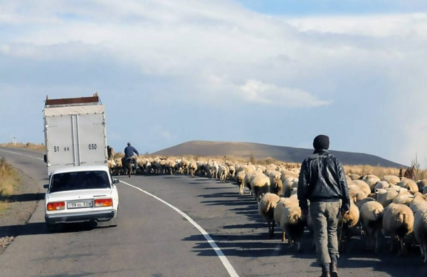 Shepherds herd sheep on the side of a road in Nagorno-Karabakh. – courtesy Unsplash/Lora Ohanessian