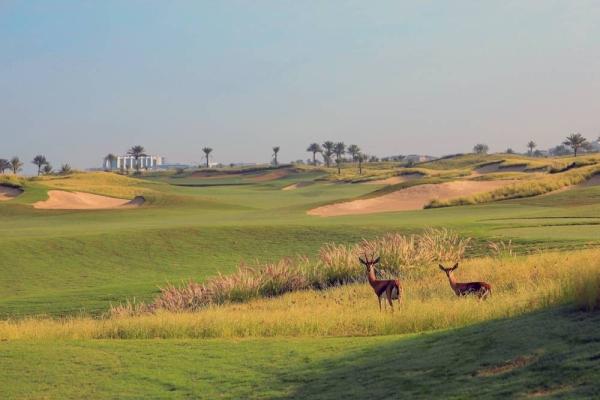 Gazelles At Saadiyat Beach Golf Club