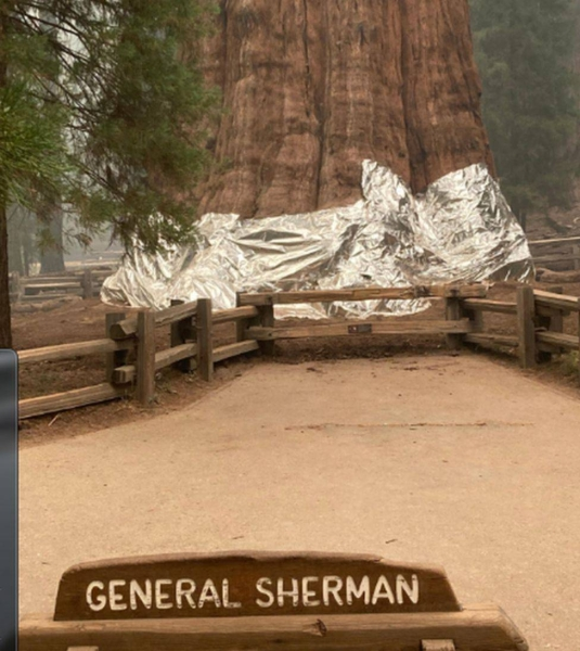 The Sequoia National Park in California is home to the biggest tree in the world.